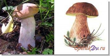 Строение и жизнь грибов