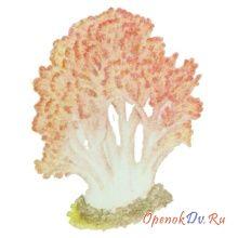 Коралловый гриб, рогатик гроздеподобный
