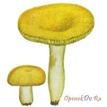 Сыроежка желтая